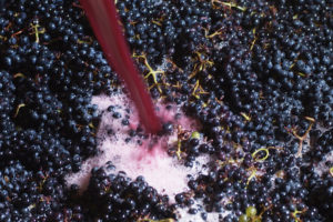 Remonta del Vino