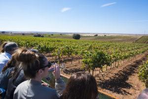 La Ruta del Vino Ribera del Guadiana, Premio a la Innovación Turística
